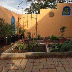 garden-june-29