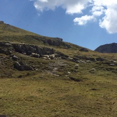 Goats and sheep outside our first stop, Rifugio Genova
