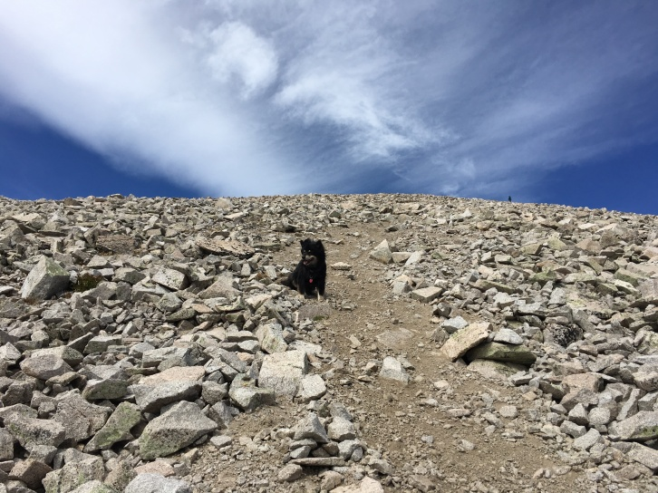 Mt. Princeton, Class 2, 14,197 ft summit, 3,200 ft elevation gain, 6.5 miles, 5.5 hours, September 29